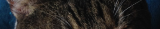 cropped-img_04162.png